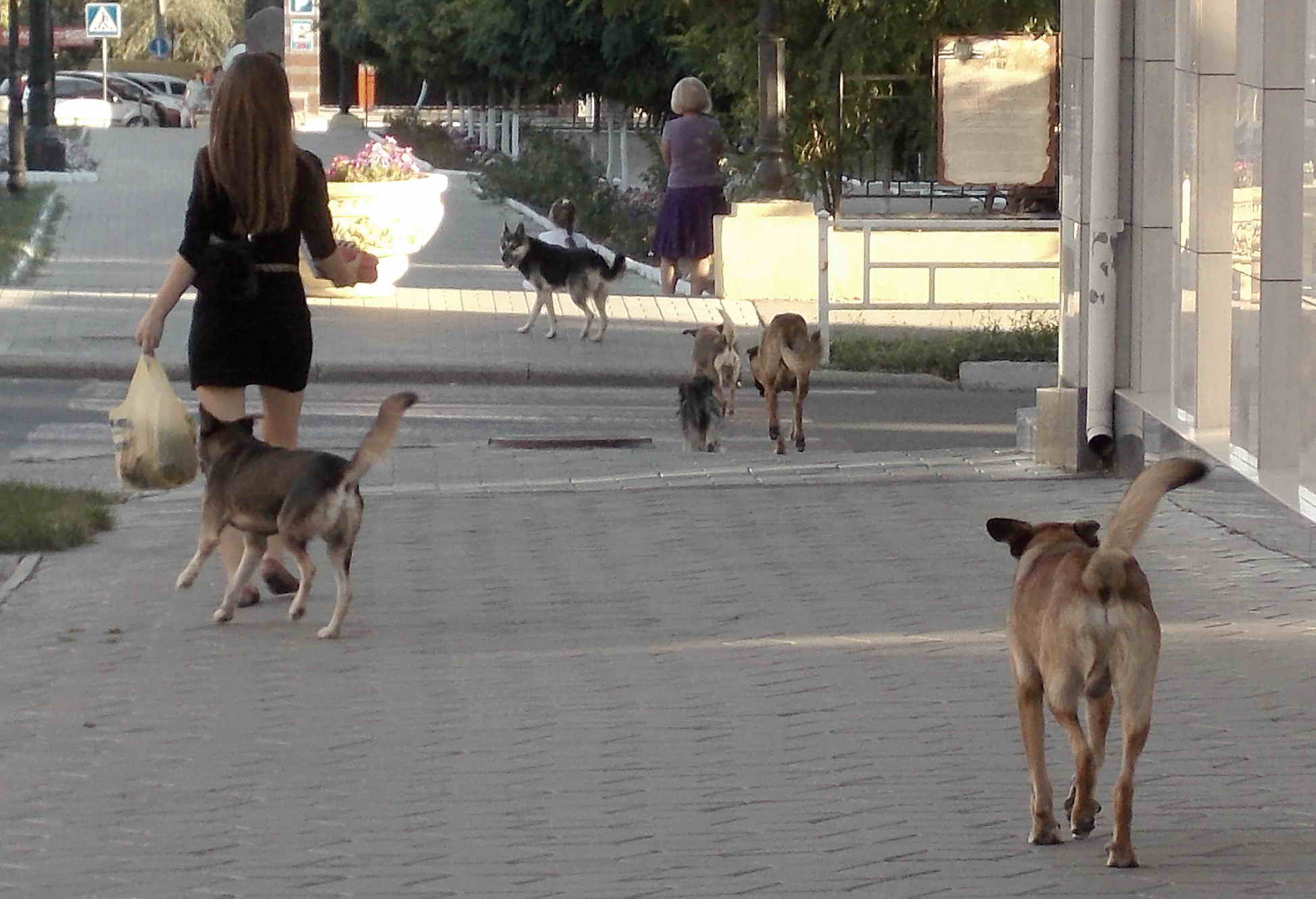 Бухарест - европейская столица бездомных собак