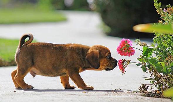 улавливать запахи как собаки