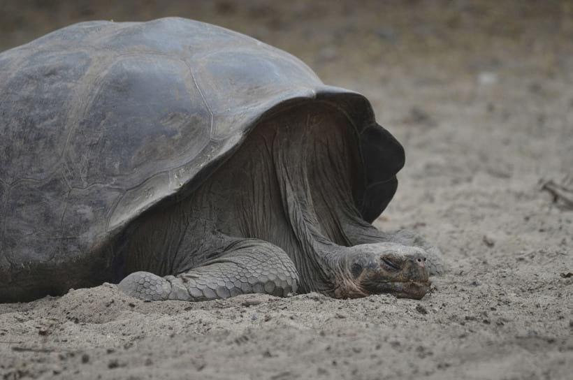 Старая мудрая черепаха