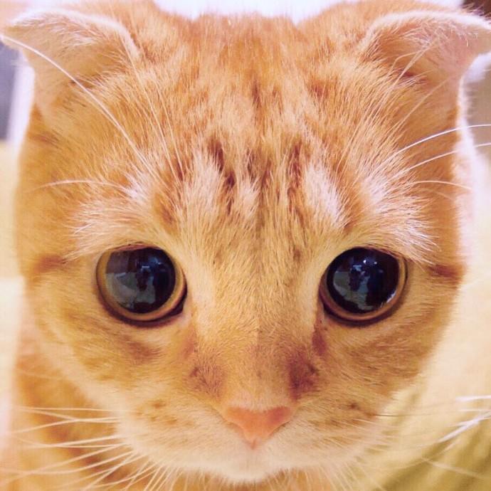 картинки котика с большими глазами десерт