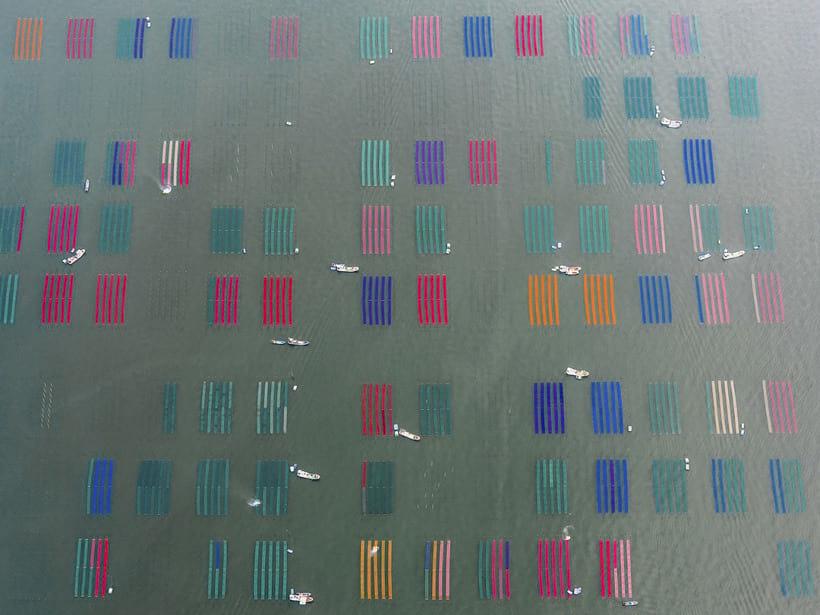 Специальные фермы по выращиванию морских водорослей в Японии
