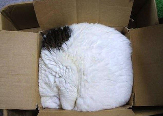 Коты спят в самых неординарных местах