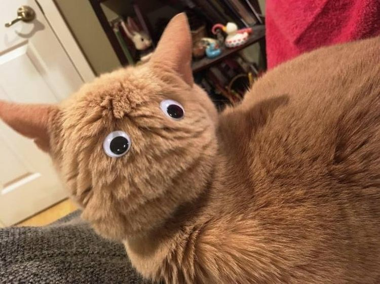 Когда кот игнорирует тебя