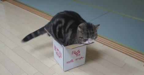 втиснуться в коробочку
