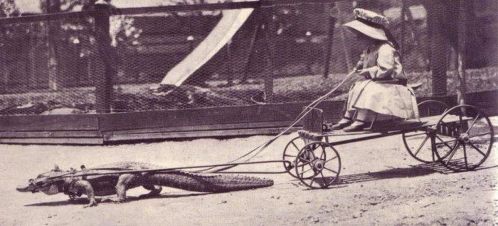 Маленькая девочка играет с любимым аллигатором.