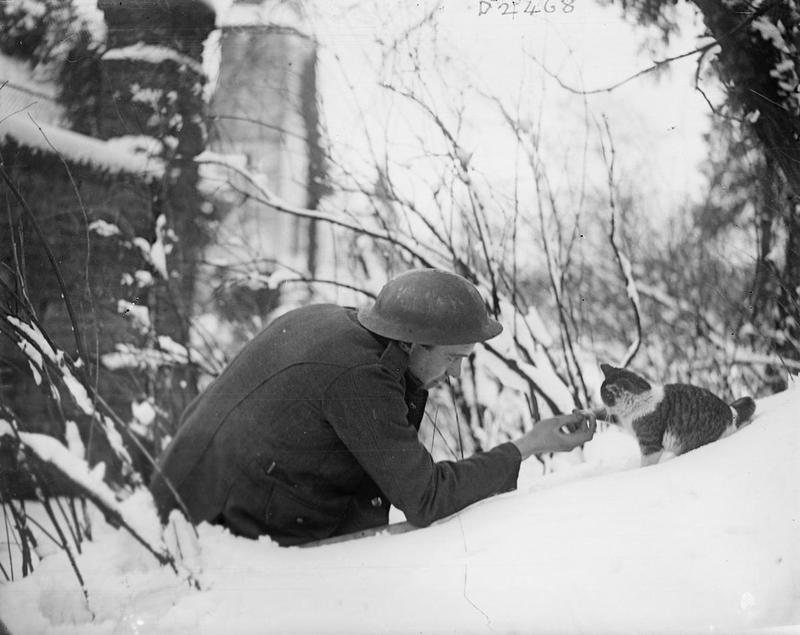Солдат делает перерыв, чтобы накормить голодную кошку, 1917.