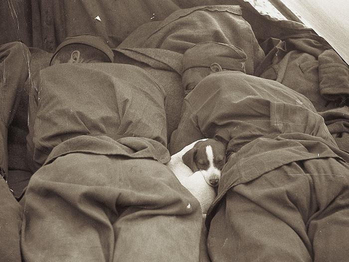 Солдаты в Польше отдыхают со своим лучшим другом, 1945.