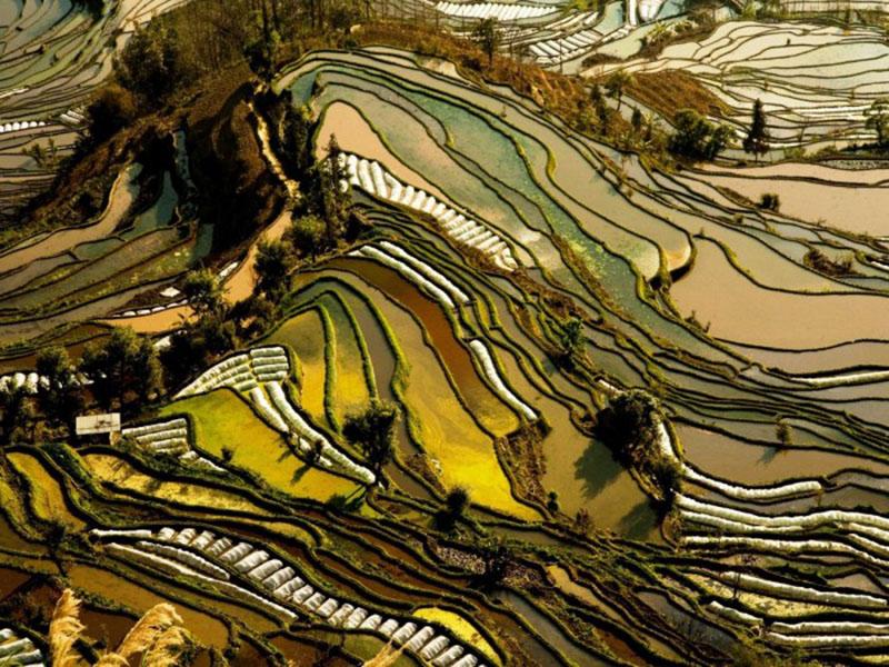 11300 га рисовых террас Юаньян (Китай)