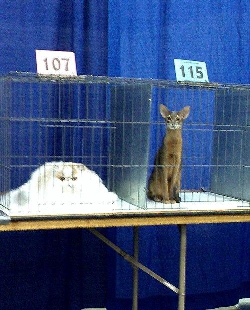 Есть два типа кошек