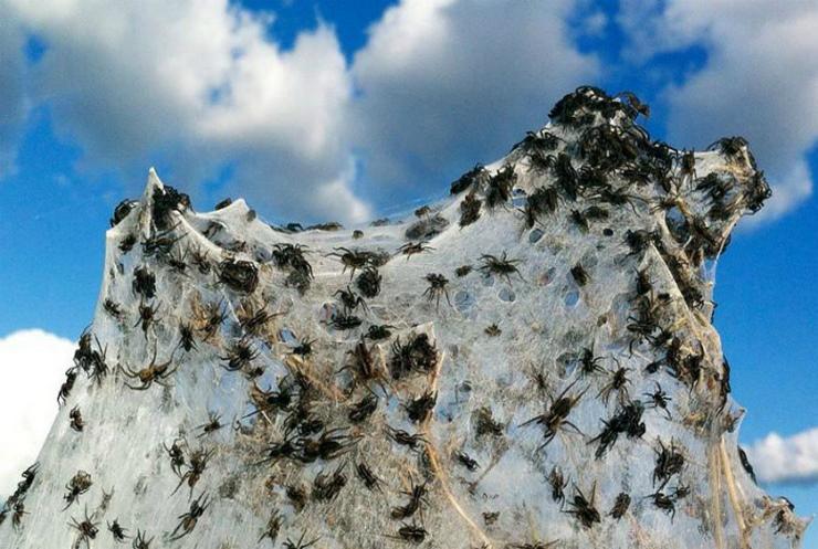 3. Австралия — идеальное место для съемок ужастиков про пауков и прочих насекомых