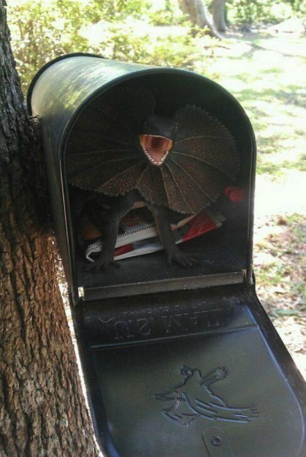 8. «Извините за беспокойство, я только хотел забрать почту…»