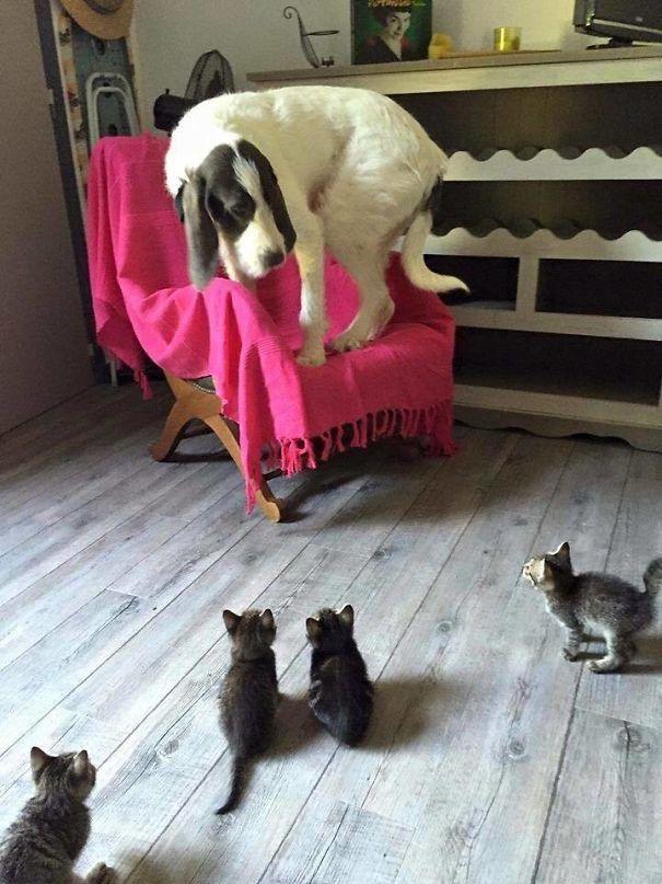 1. Котята — это страшно