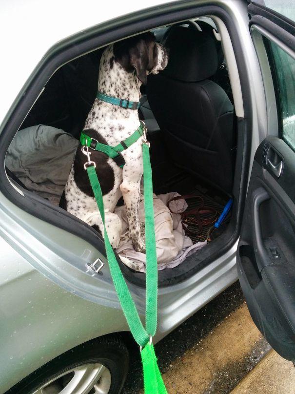 9. Мой пёс боится дождя, не хочет выходить и делает вид, будто мы ещё не приехали