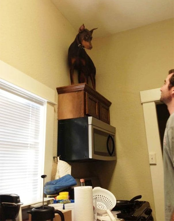 11. Он просто увидел мышь