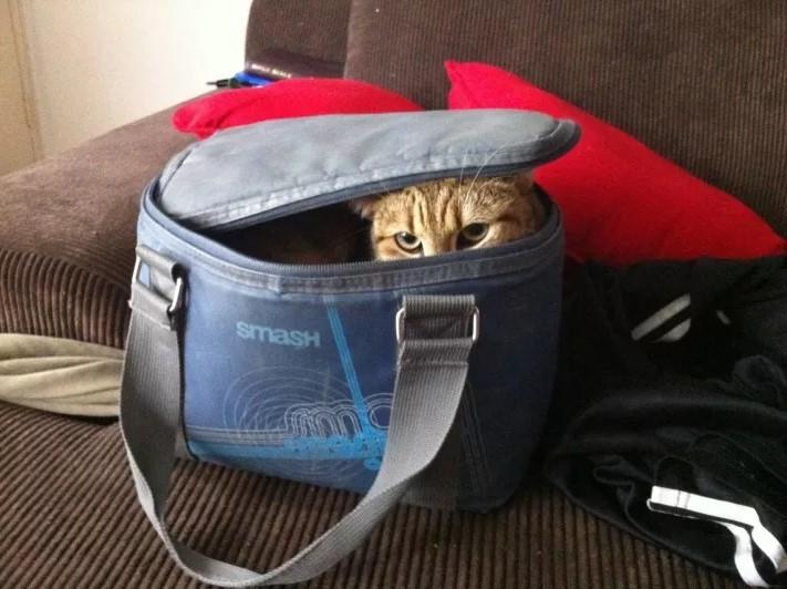 Этот взгляд подразумевает, что сегодня вы пойдете на работу без сумки для ланча