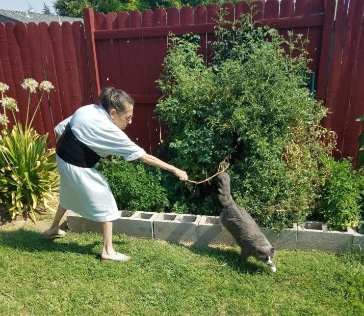 Этому коту чётко дали понять, что в кусты ходить нельзя, но он вернётся…