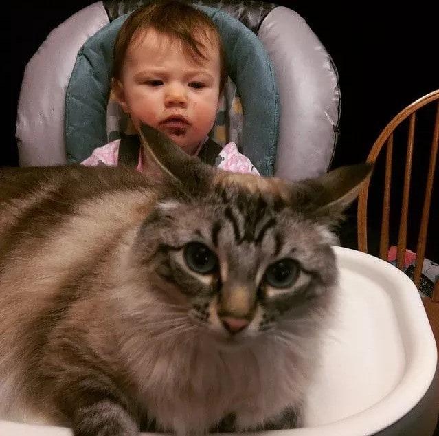 Этот котик думает, что его СНОВА пора кормить