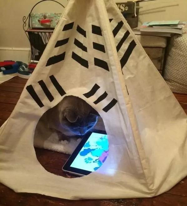 Кот занят, беспокоить его нельзя!