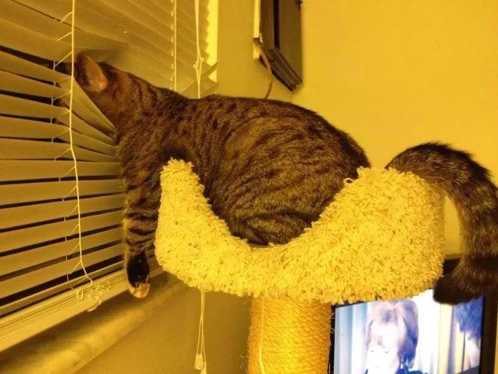 Этот котик любит уют и подглядывать