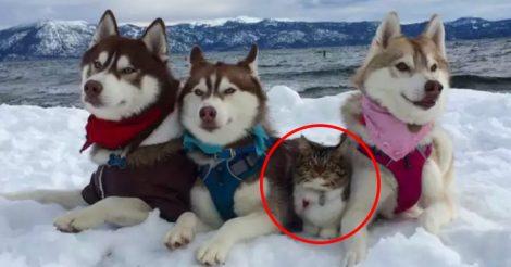 Кошка Рози