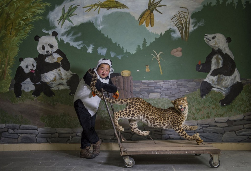 «Смотритель леопарда». Автор фото: Эми Витале. Местоположение: Волонг, Китай.