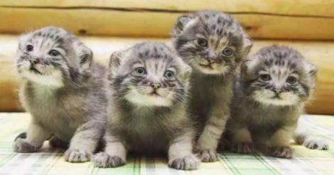 обычные котята