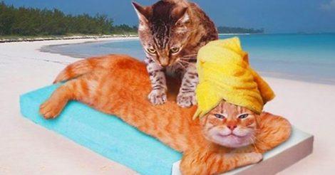 кошка делает массаж