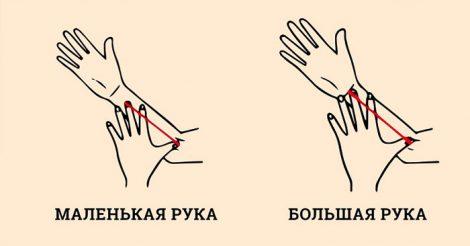 размер руки