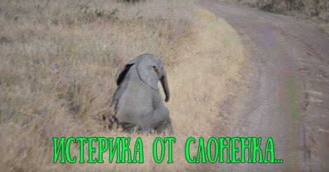 Истерика маленького слоненка