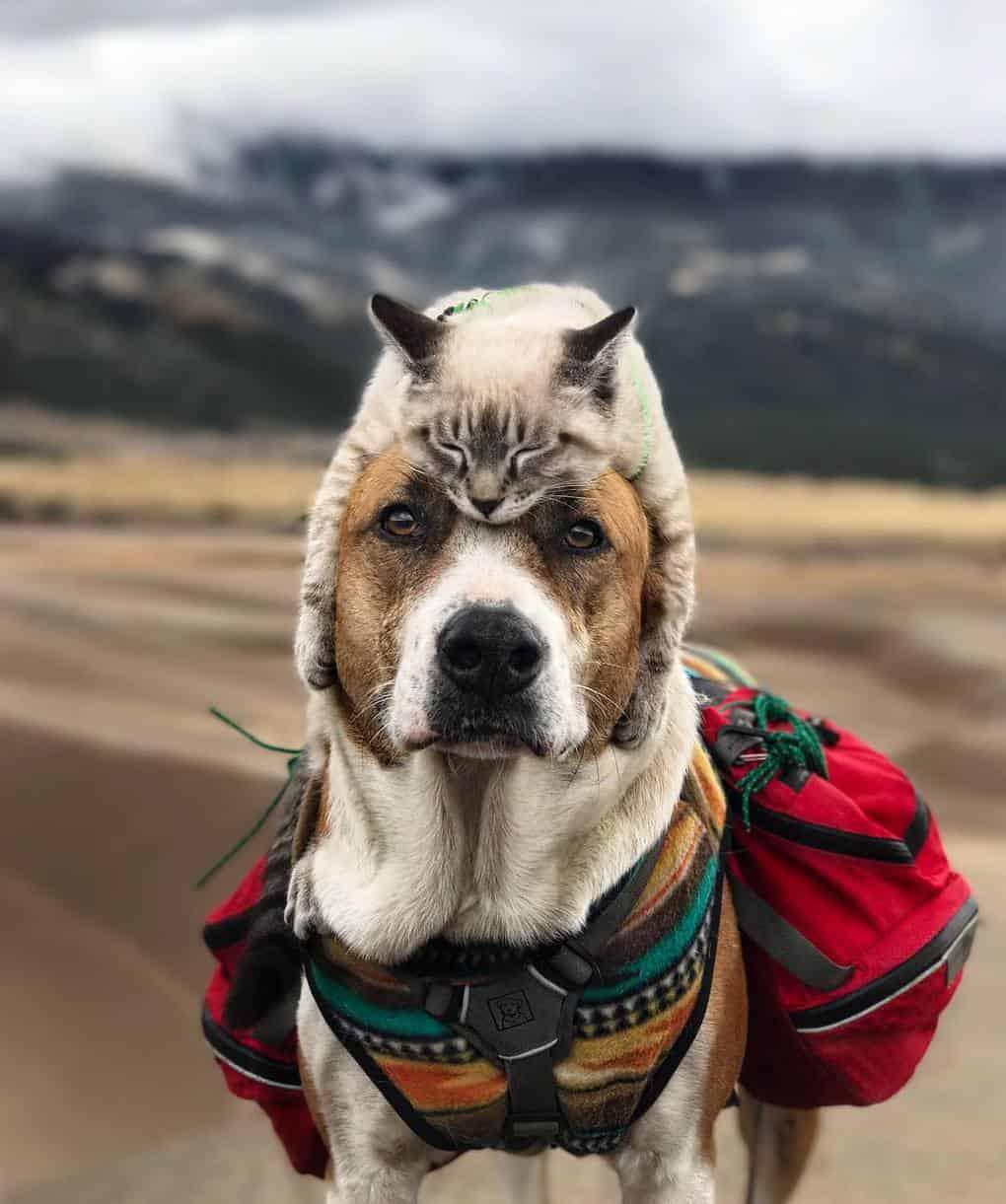 Балу любит лежать на голове у пса, за что его прозвали «шапка-кот»