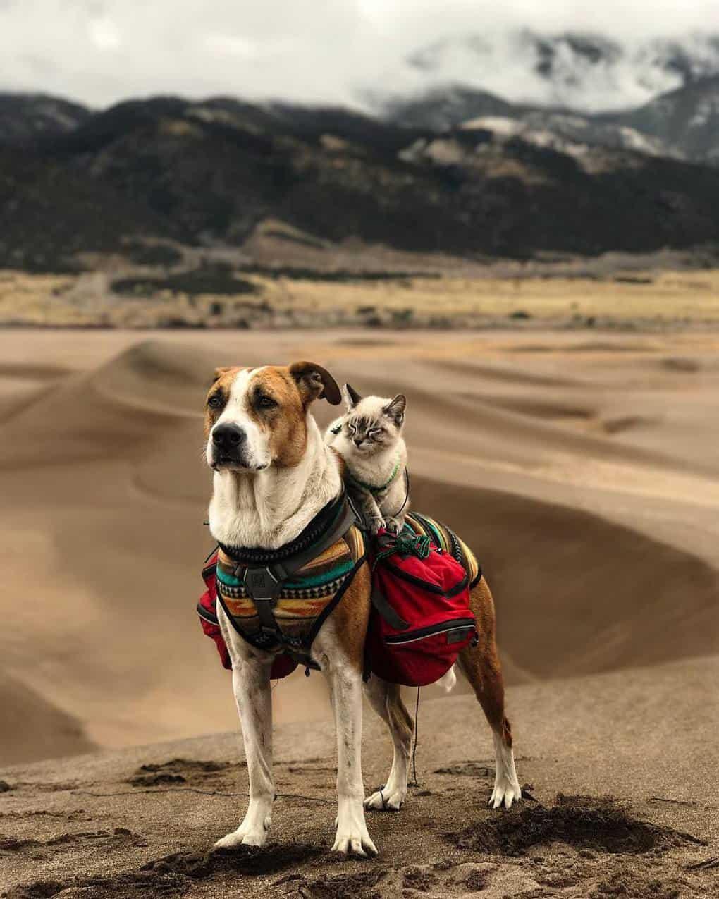Генри полюбил горы с первой поездки