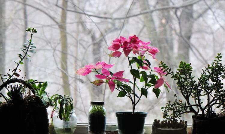 3. Щепотка сухого порошка перекиси водорода (она продается в таблетках, таблетку нужно растолочь) помогает предотвратить возникновение грибка на листьях комнатных растений.