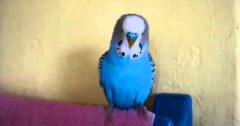 птичка слышит все