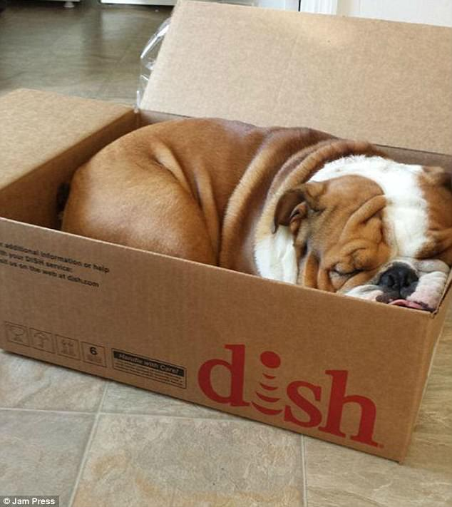 Не только кошки коробки любят