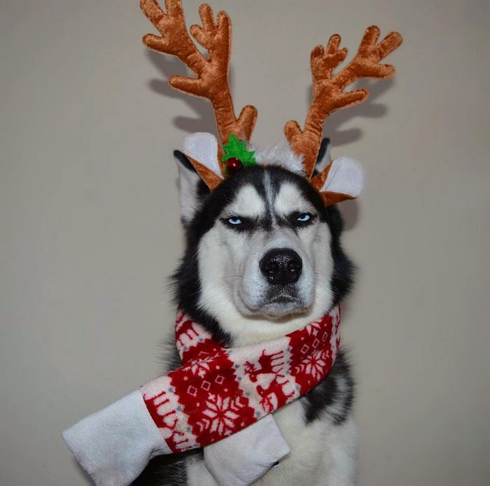 Когда явно не рад праздникам