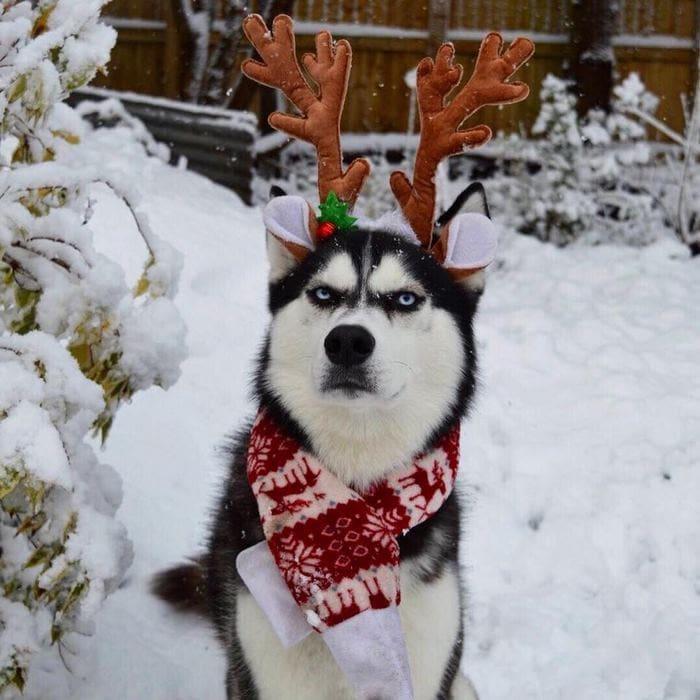 И даже снежок не помогает