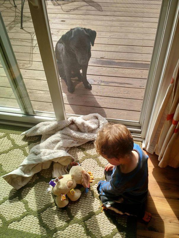 7. Мой сын кормил игрушечную собаку, пока настоящая грустила за дверью