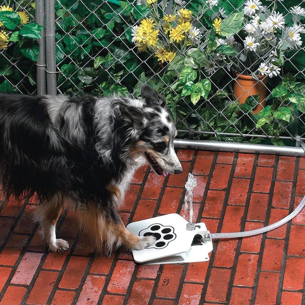 6. Фонтан для самостоятельных псов