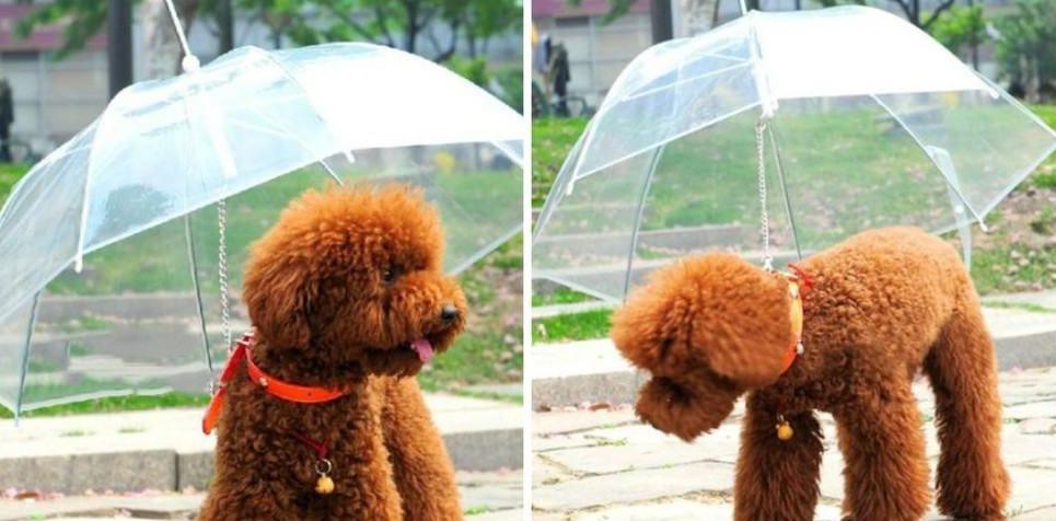 15. Собачий зонт со свободным обзором