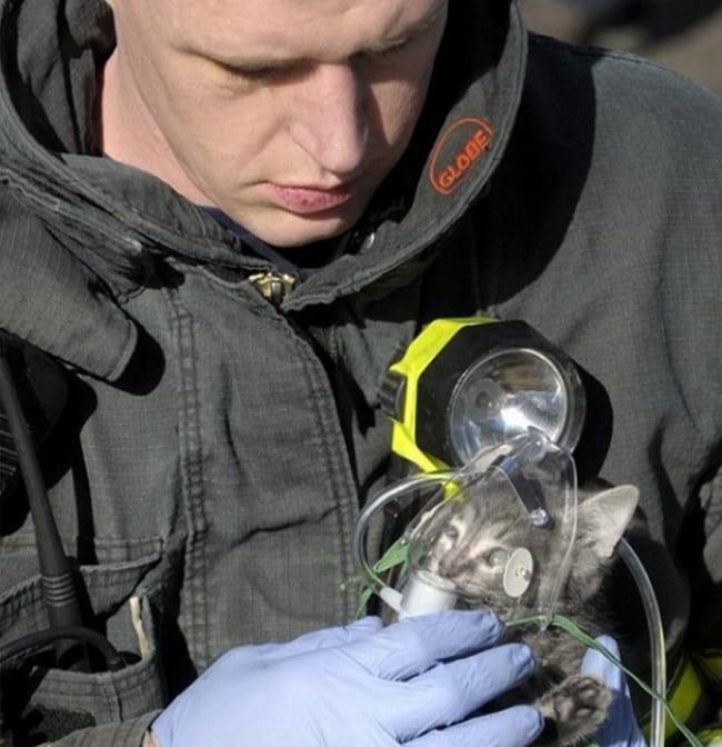 4. Ни для кого не секрет: у пожарных огромное сердце! Этот спасатель вынес из пожара маленького котеночка и одел ему маску с кислородом