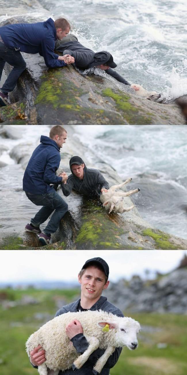12. Два молодых человека увидели, что молодой ягненок сорвался с камня и стал тонуть. Они не прошли мимо, а спасли ему жизнь.