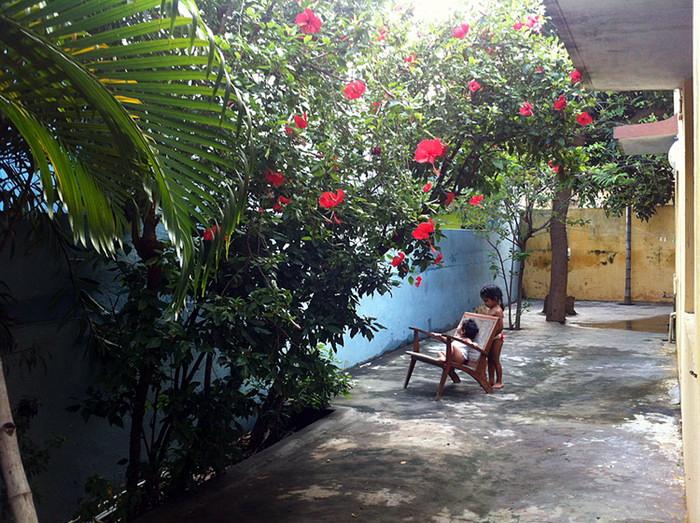 32. Эти яркие цветы - гибискус. Еще у нас во дворе растут кокосы, манго и кремовые яблоки.