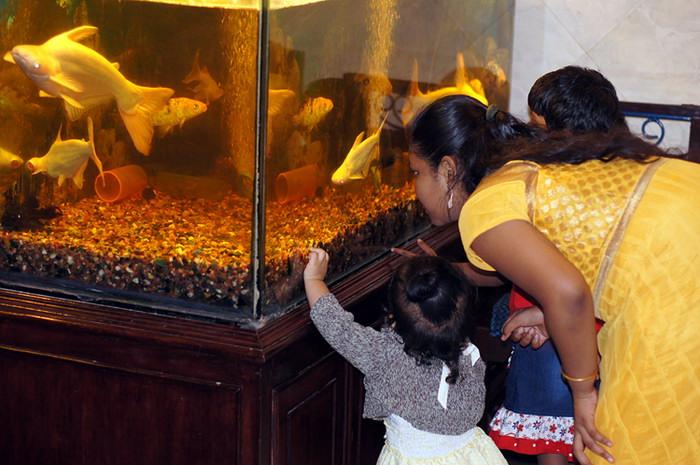 47. Тем временем, внучки нашего преподавателя забрали Миру смотреть на рыбок.