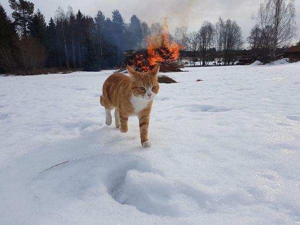 2. Фото кота-гангстера, который спокойно покидает место преступления