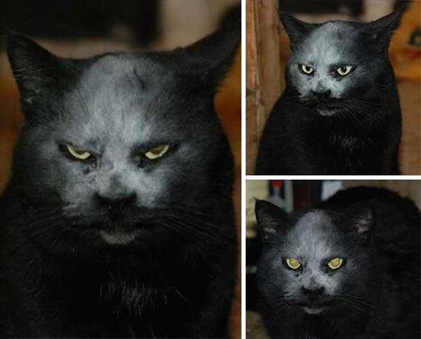 7. Это не дьявол, это котик в муке (или нет)