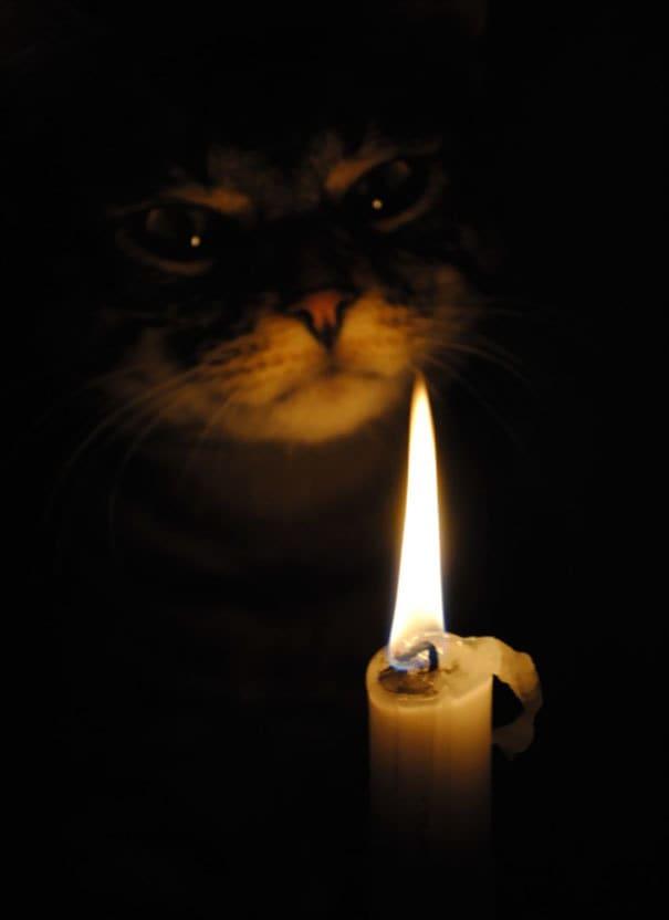 20. Кот и его зловещий обряд