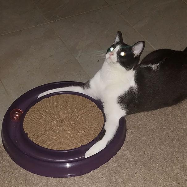 21. Ещё один кот обращается к своему адскому владыке