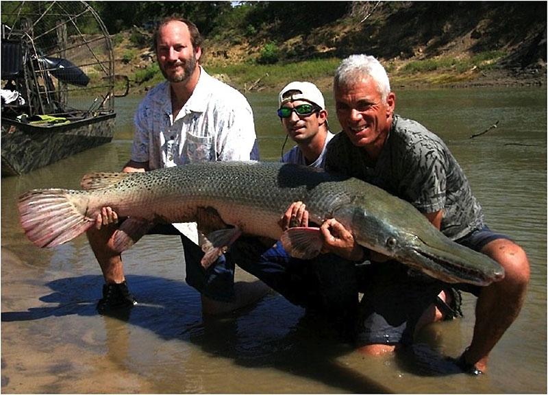 1. Двухметровая 50-килограммовая панцирная щука, пойманная в реке Тринити в Техасе.