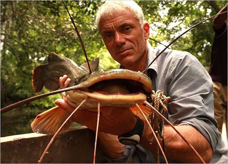 11. Сом вунду, который может достигать 1,5 метра в длину, а максимальный вес его составлял 54 кг.