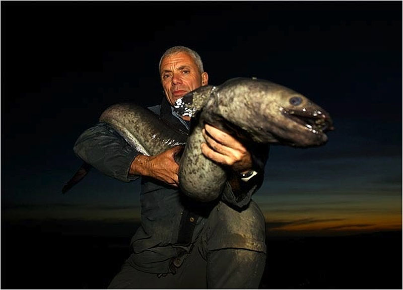 12. Новозеландский угорь, который может достигать 1,5 метра в длину.